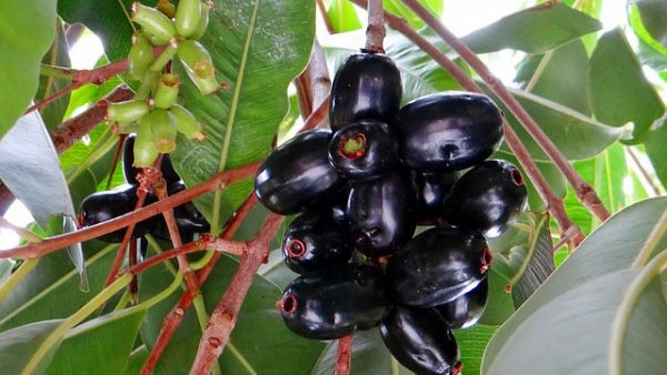 Buah tropis kaya vitamin C