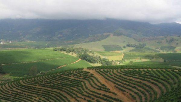 Perkebunan kopi di Brasil