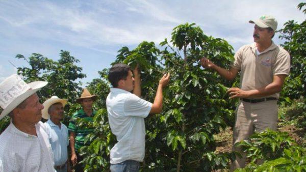 Negara penghasil kopi