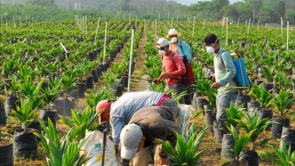Negara penghasil kelapa sawit