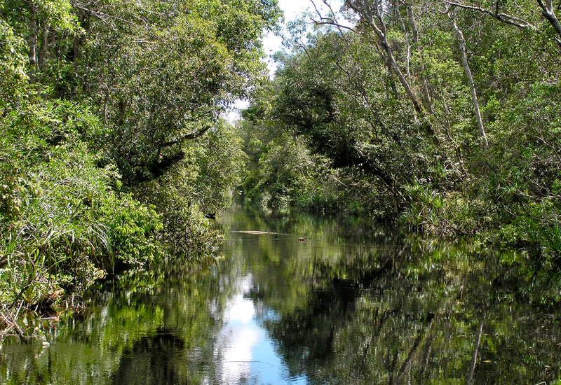 Hutan gambut Kalimantan