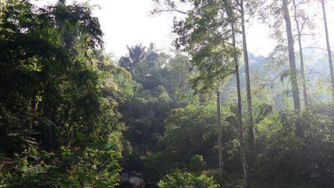 Panorama hutan hujan tropis