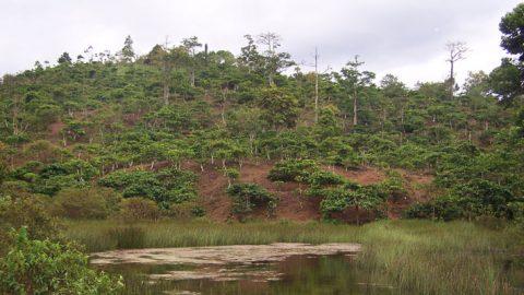 Lahan basah, Lampung.