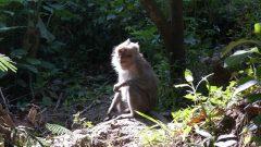 Perbedaan kera dan monyet