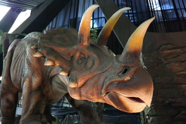 Perbedaan badak dan triceratops